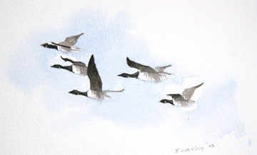 Brent Geese © Ray Scally